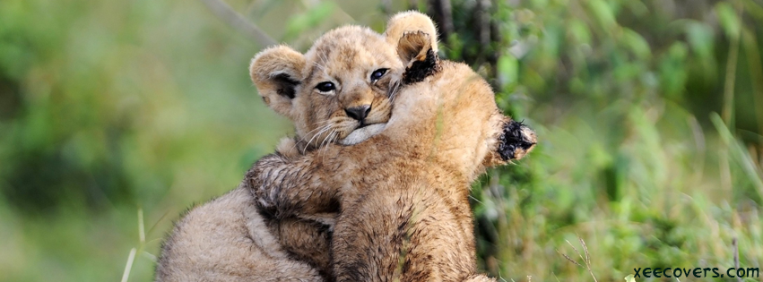 2 Baby Lions FB Cover Photo HD