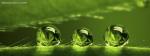 3D Rain Drops On Green Stem
