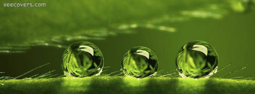 3D Rain Drops On Green Stem FB Cover Photo HD
