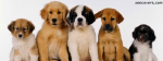 5 Cute Pups