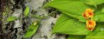 A Happy 3D Frog Enjoying On Leaves