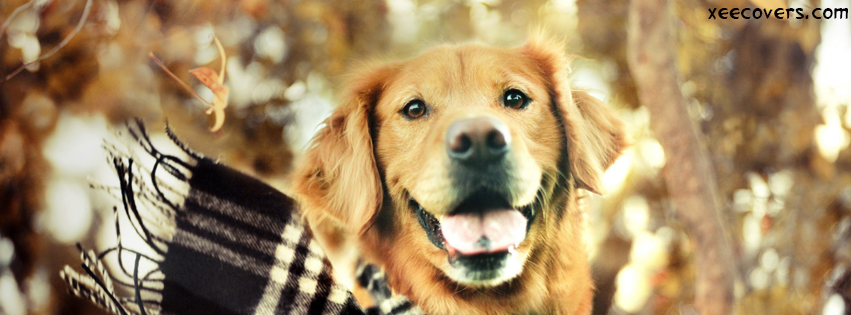 A Happy Dog FB Cover Photo HD