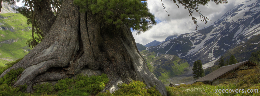 A Very Old Green Tree FB Cover Photo HD
