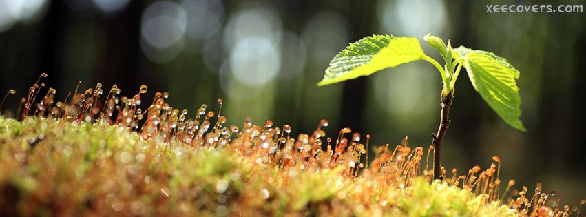 Aws And A Newly Growing Plant FB Cover Photo HD