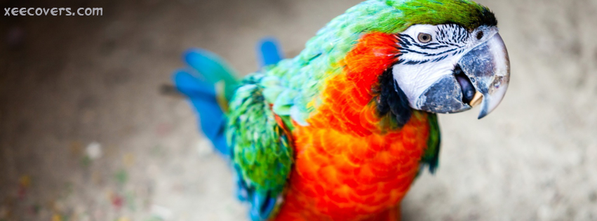 Beautiful Parot FB Cover Photo HD