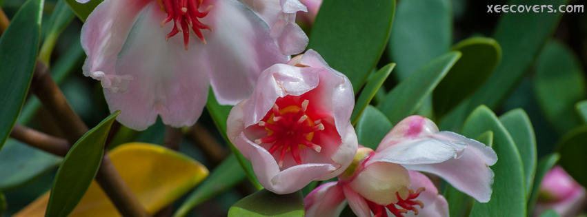 Beautiful Pink Flowers With Green Leaves facebook cover photo hd