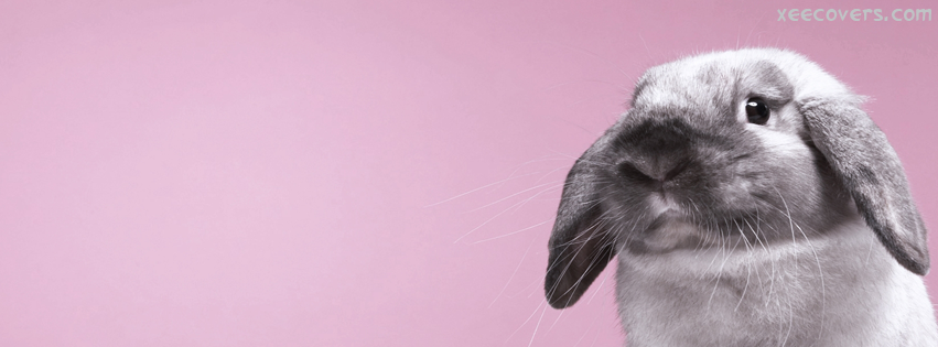Black And White Rabbit FB Cover Photo HD