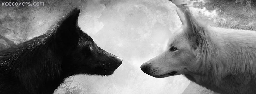 Black Wolf Vs White Volf FB Cover Photo HD