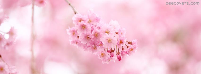 Blossoms FB Cover Photo HD
