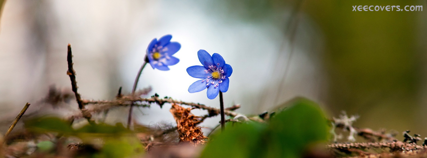 Blue Flowers facebook cover photo hd