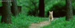 Brown Cat In A Greenish Jungle