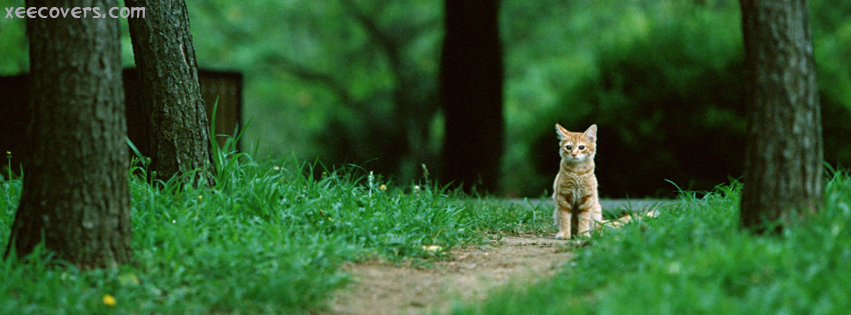 Brown Cat In A Greenish Jungle FB Cover Photo HD
