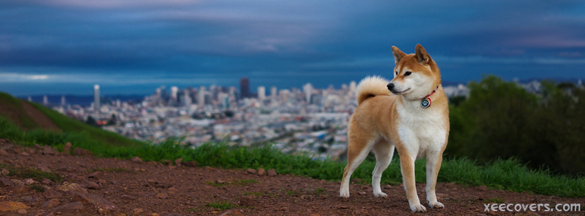 Brownish White Fox On Hills Top FB Cover Photo HD
