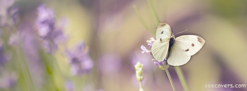 Butterfly On Purple Flowers Plant FB Cover Photo HD