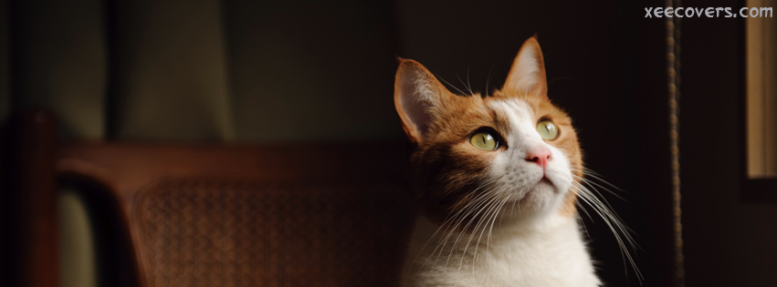 Cat Needs Something From You FB Cover Photo HD