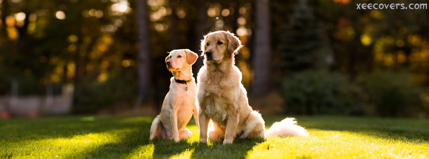 Dog Pair Taking Sun Bath FB Cover Photo HD