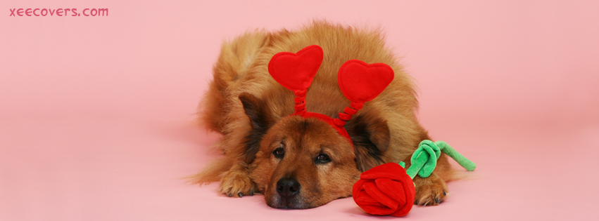 Dog With Roses FB Cover Photo HD