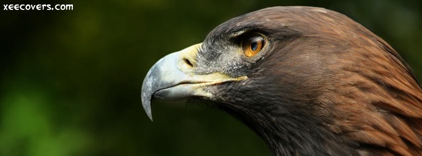 Eagle FB Cover Photo HD