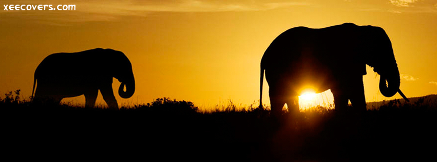 Elephants Returning To Their Homes FB Cover Photo HD