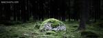 Grassy Rocks In Jungle