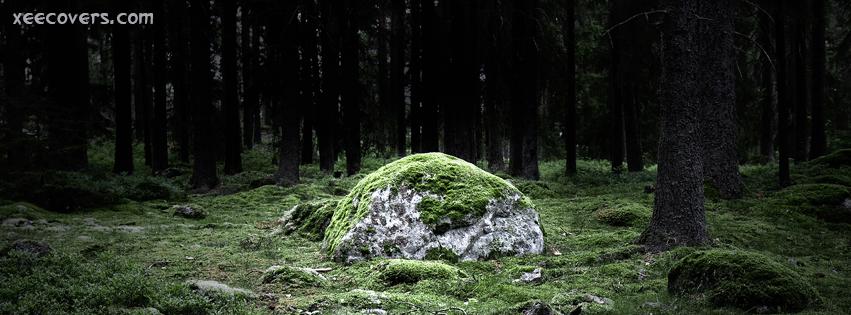 Grassy Rocks In Jungle FB Cover Photo HD