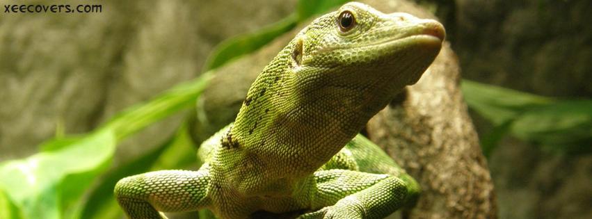 Green Lizard FB Cover Photo HD