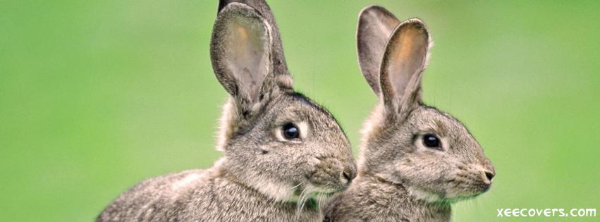 Grey Rabbits FB Cover Photo HD