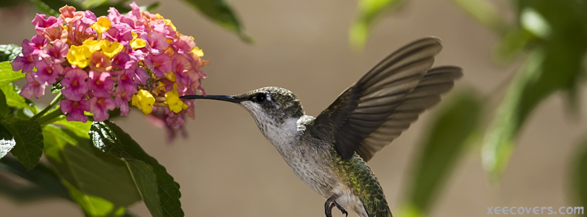 Humming Bird Sucking Nector From Flowers FB Cover Photo HD