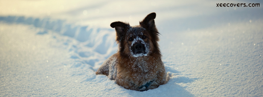 Let This Dog Enjoy In Snow FB Cover Photo HD