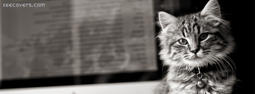 Lonely Cat Needs Love FB Cover Photo HD