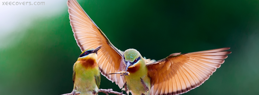 Love Birds FB Cover Photo HD