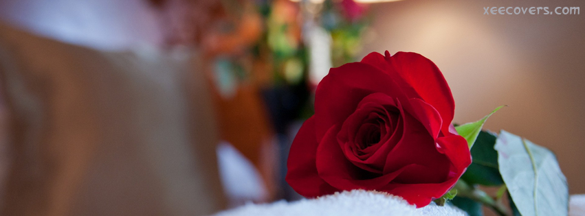 Love Rose FB Cover Photo HD
