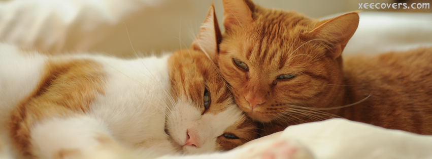 Lovely Cats Making Love FB Cover Photo HD