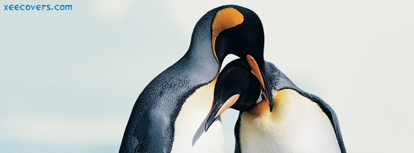 Lovely Penguins FB Cover Photo HD