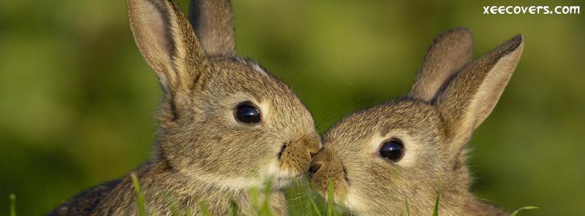 Loving Rabbits FB Cover Photo HD