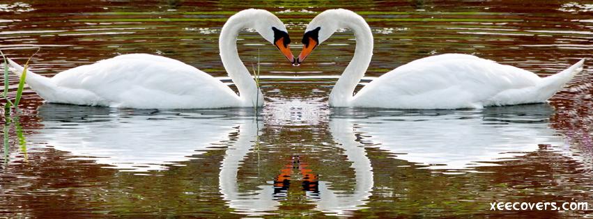 Loving Ducks FB Cover Photo HD