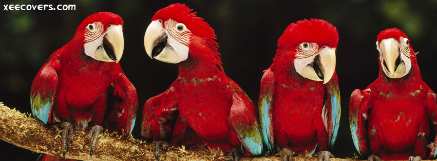 Macow Parrots FB Cover Photo HD