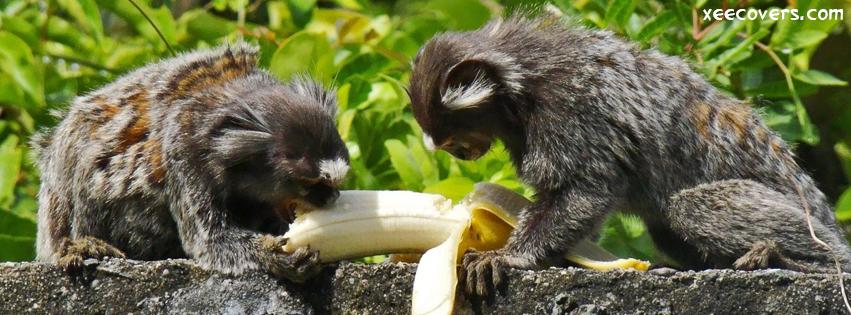Monkeys Enjoying Banana FB Cover Photo HD