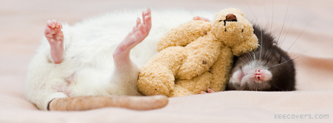 Mouse With His Teddy Bear facebook cover - hd wallpaper - hd covers