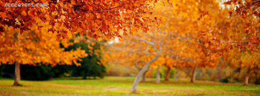 Orange Trees In Autumn Season FB Cover Photo HD