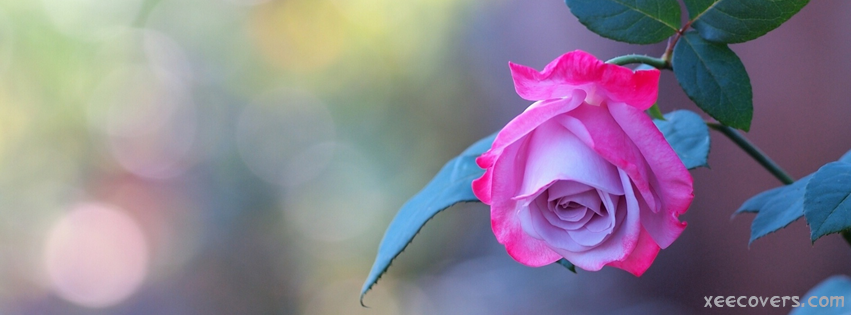 Pink Flower With Green Leaves FB Cover Photo HD