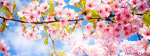 Pink Flowers And The Blue Sky Landscape