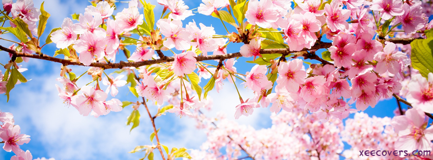 Pink Flowers And The Blue Sky Landscape facebook cover photo hd