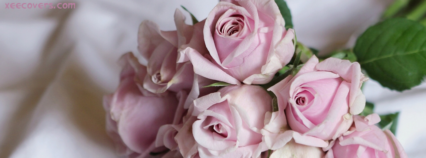 Pink Roses FB Cover Photo HD