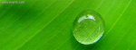 Rain Drop On Leaf
