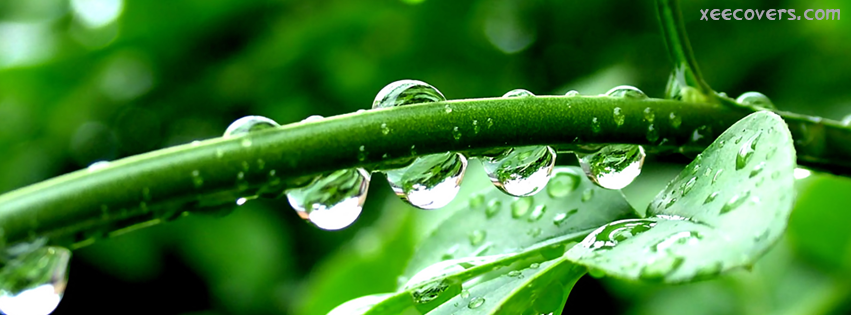 Rain Drops On Stem facebook cover photo hd