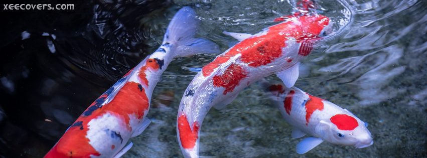 Red And White Fishes Playing FB Cover Photo HD