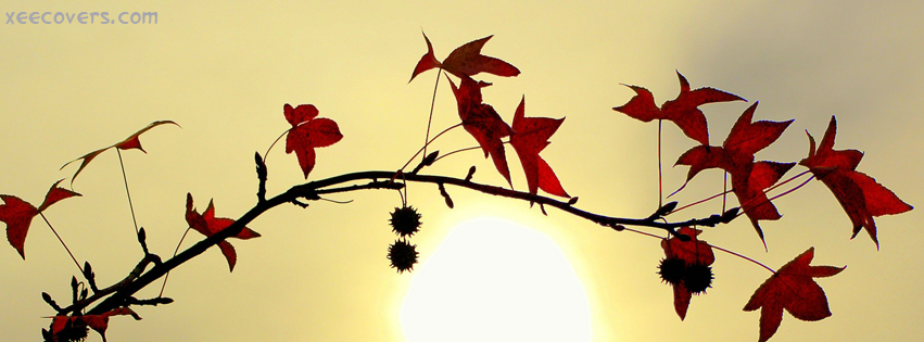 Red Leaves facebook cover photo hd