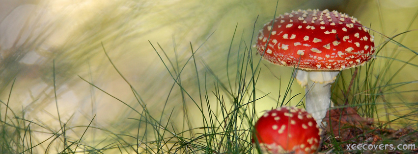 Red Mushrooms FB Cover Photo HD