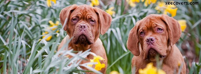 Sad Dog Couple FB Cover Photo HD